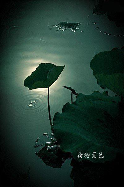 希望看完后能让你心静如水 (转)  - dy.yu - dy.yu的博客
