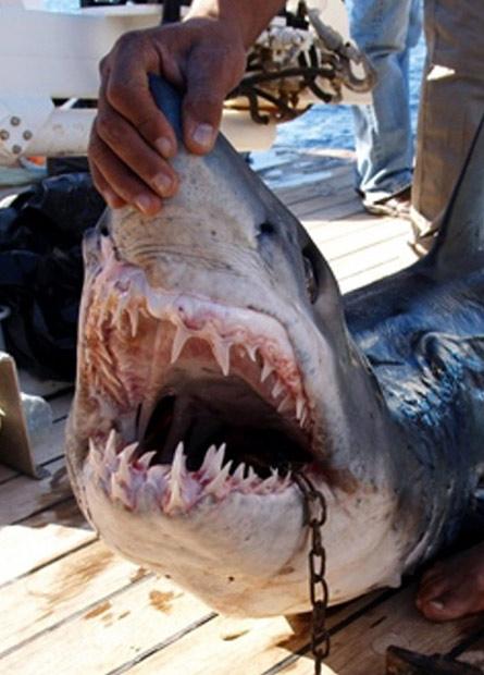 埃及旅游胜地惊现鲨鱼咬死人,游客谈鲨色变(组图) - 刻薄嘴 - 刻薄嘴的网易博客:看世界
