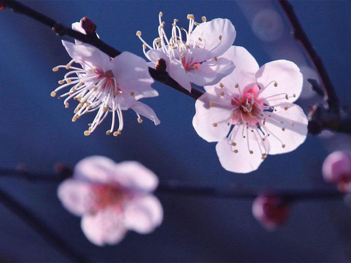 十大明花欣赏  - 风中的雨 - tszx2008929 的博客