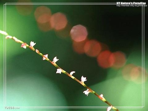 爱读书的女人最美丽(转载) - 玉池桃红 - 玉池桃红的博客