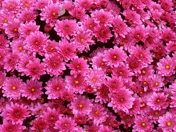 纯音古筝特动听 鲜花盛开伴心情 - 渴望美好 - 渴望美好的百科精品博客(学习娱乐之家)