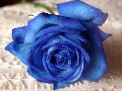 蓝颜知己的真正含义 - wng12203 - wng12203的博客