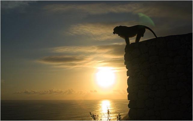 [原]2006年个人摄影回顾之十佳图片  - Tarzan - 走过大地