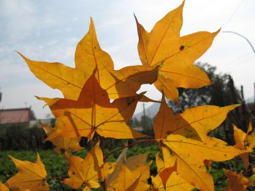 十月山中美如画 - 无公害老玉米 - 无公害老玉米的博客