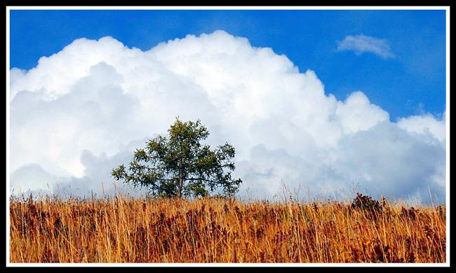 (原创图文)北疆(5)——喀纳斯 - 照看天下 - 照看天下的博客