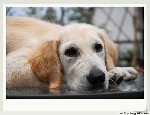 狗狗 - wxfiny - wxfiny的博客