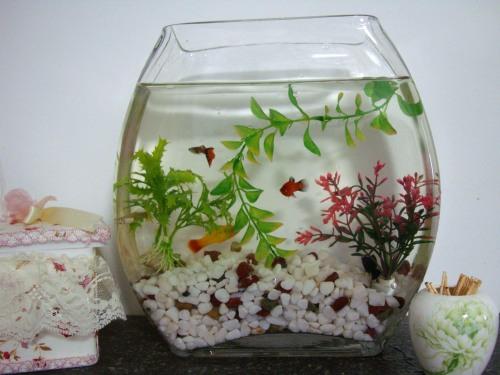 清水养鱼 - 苏泽立 - 苏泽立的博客