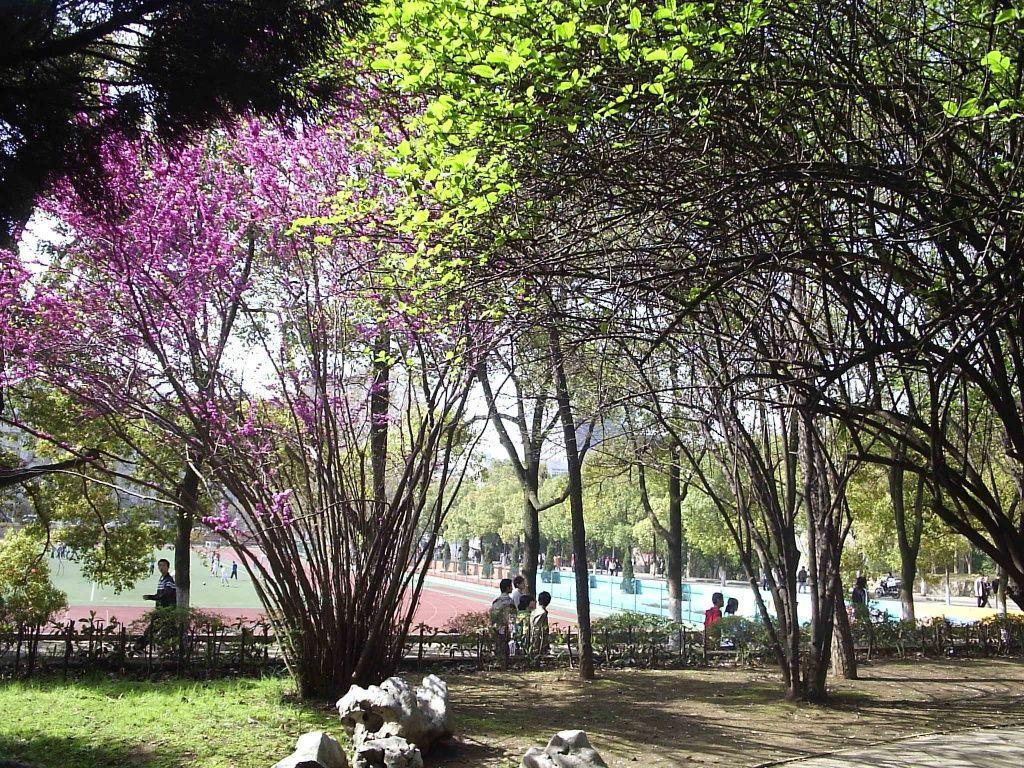 中国十个最美丽的大学排行榜 夏日琵琶 夏日琵琶的博客
