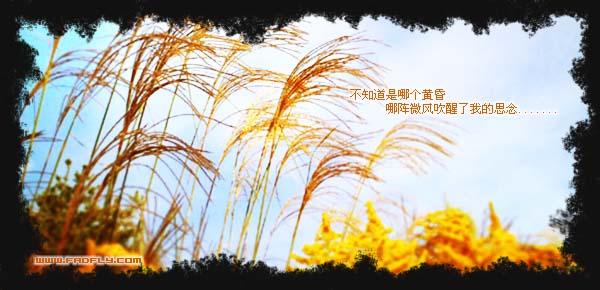秋思 - 雁月菊蚕 - 流泪的风......