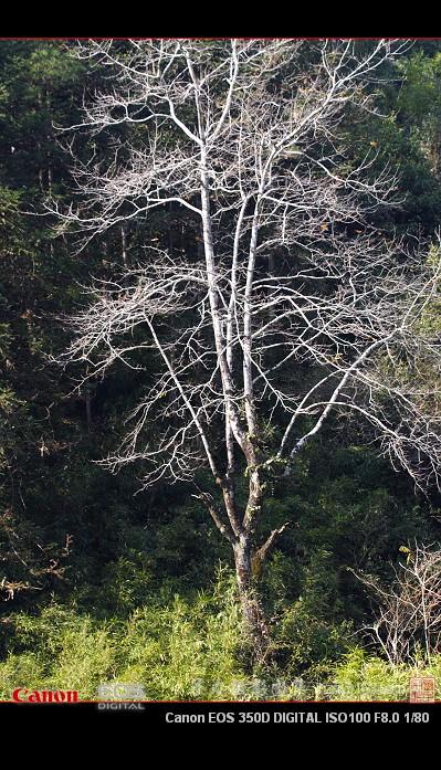 2009年1月5日 - 子力 - 子力摄影图集