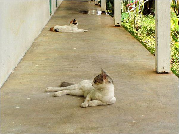 [原]塞国漫记·我和我的宠物们 - Tarzan - 走过大地