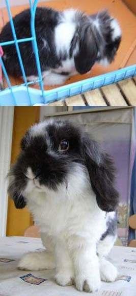 满身尽带泥点点……另外有兔子招领!不是我!我不卖! - 粥粥 - 胖兔子粥粥