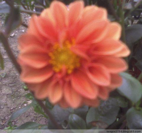 花   卉(一) - 祥云满天 - 祥云满天的博客