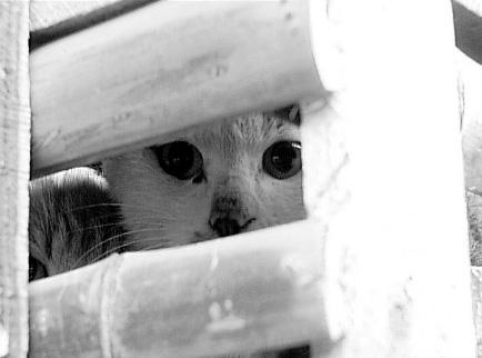 中国该不该立法保护猫 - 暗之圣域 - 暗之圣域