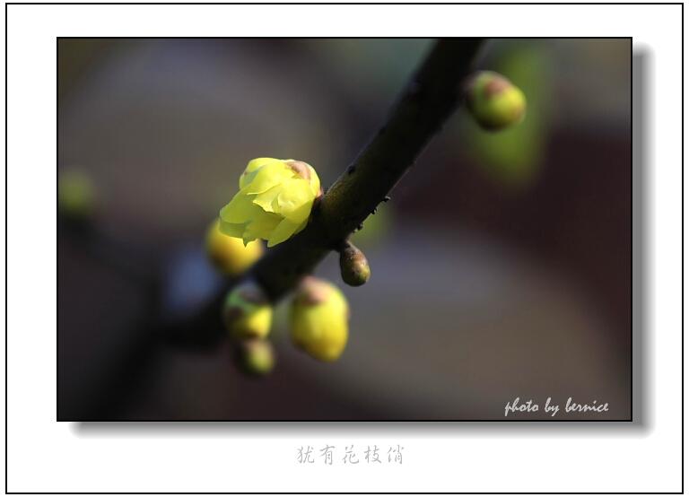 [原创摄影]疏影横斜 - 王工 - 王工的摄影博客
