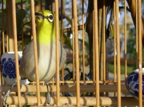 囚鸟与咖啡