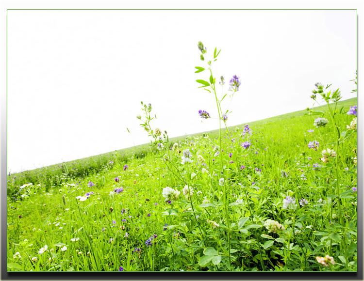 春天 - 人生如梦 - 人生如梦