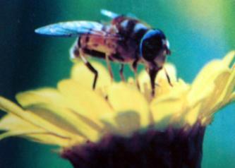 蜜蜂和苍蝇(转载网友LEISI的博文)