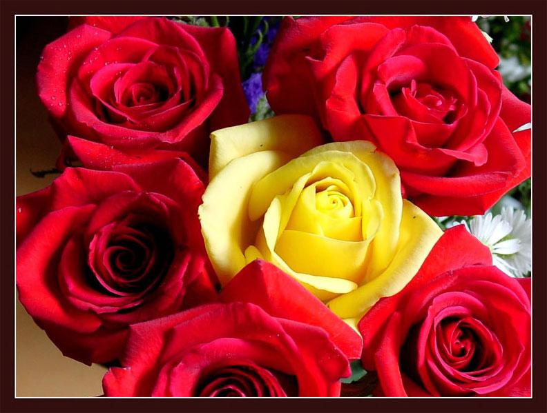 鲜花送给屏前的你 -  老排长 - 老排长(6660409)