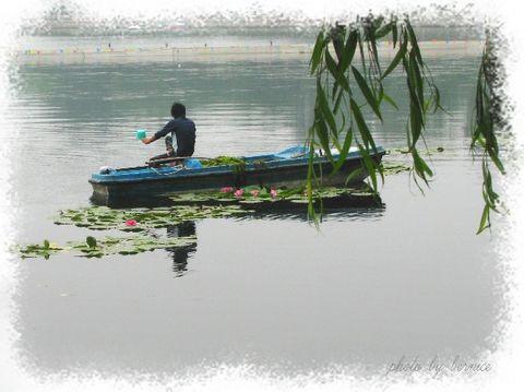 (原创)娇人睡莲徜徉后海 - 王工 - 王工的摄影博客