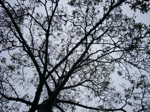 【原】古镇幽韵(累了,偷个懒,不着太多文字) - 飘渺的风笛 - 飘渺的风笛