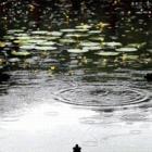 雨的梦 - 雨的印记 - 人之相悉悉于品,人之相敬敬于德。