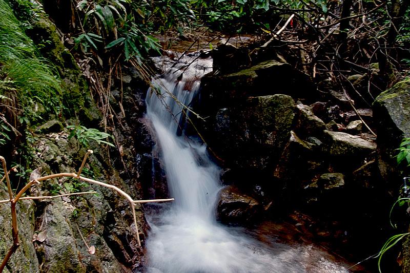 【原创】溪水潺潺 - 歪树 - 歪树