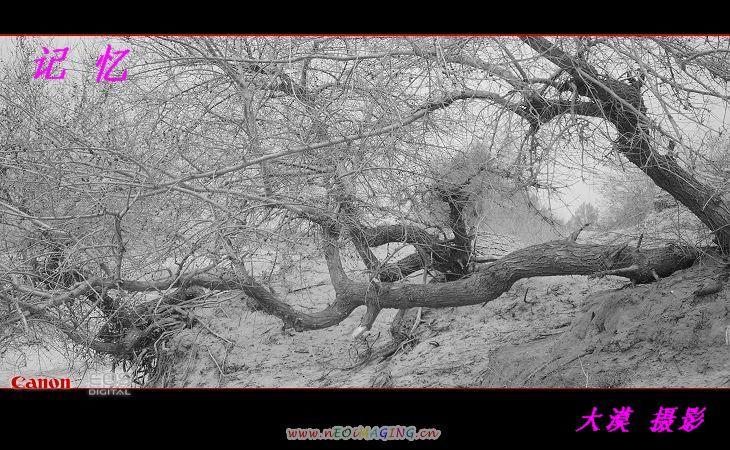 早春记忆【大漠摄影】 - 大漠独行 - 大漠深处camel的博客
