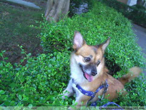 狗与家 - 溪峰观海 - 我的博客