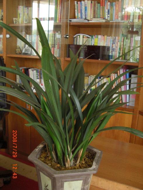 我书房里的兰花 - 汤素兰 - 汤素兰的博客