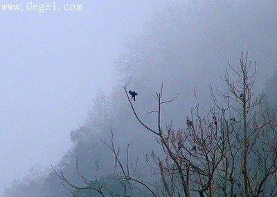 飛馳在天國花園夜空上的流星... - 網際飛星 - 璀璨星空旖旎花園gegei.com