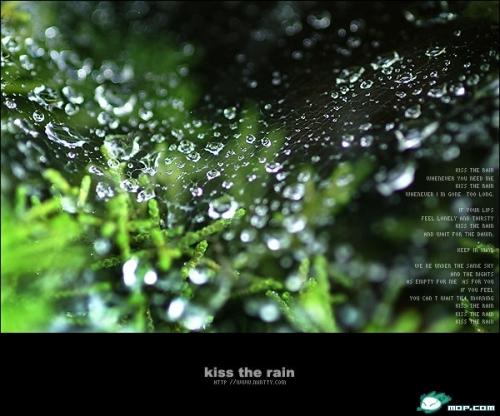 关于雨的诗词_关于诗词的手抄报_月季花诗词