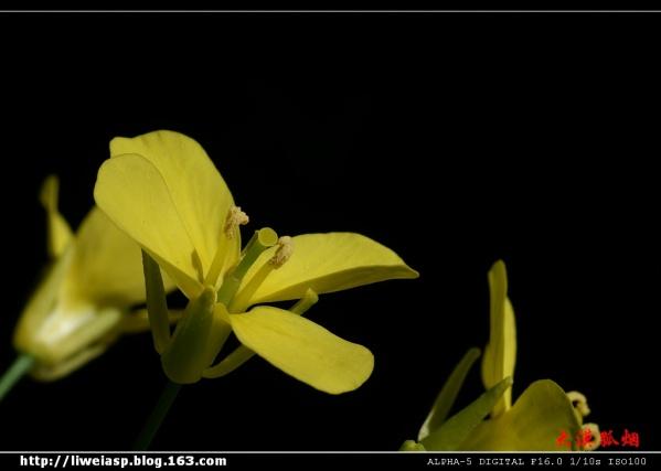 【摄影】白菜花儿 - 大漠孤烟 - 大漠孤烟的博客