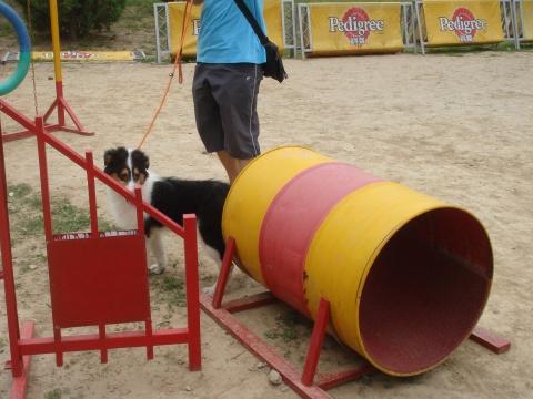 我的儿童节 - Villa - Villa的狗窝窝