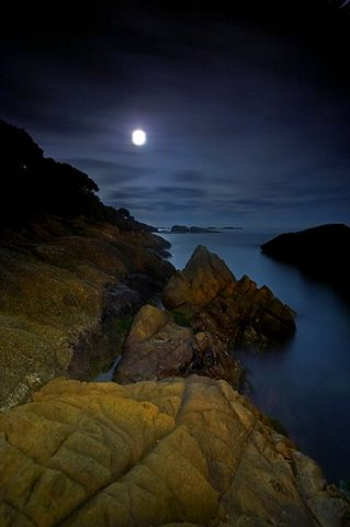 诗歌:静月夜 - 草根 - 草根馨园