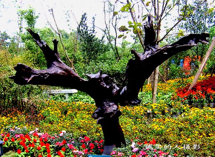 【引用】[原创摄影]--乌木雕塑 - 山野老闲徒 - 山野老闲徒的博客
