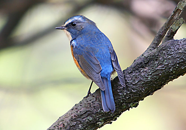 Blue Brid - rx0818 /  蓝鸟 - 时空中消逝的影子-----在记忆中寻回