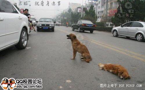中国街头最感人一幕:你的生命如此多情 - 畅快呼吸 - 畅快空间