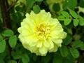 春草花园〈未名春草原创〉 - 未名春草 - 少年狂草堂
