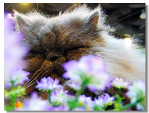 (假)花和(老头)脸 - 二两 - 贰两·二兩·2両