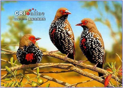 世界上最美丽的9种鸟  - 渭水诤友 - 渭水诤友 百科知识精品博客