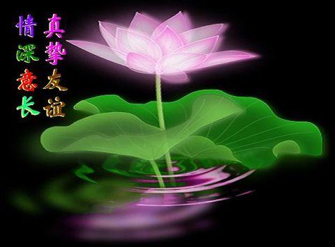 写在沙漠上和刻在石头上 - 青松不老 - 枝繁叶茂!祝愿祖国繁荣昌盛!!