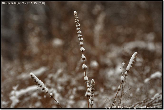 雪(一) - 南河 - 南河小居