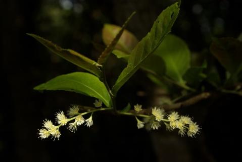 森林中的野花-大網仔,黃毛應,水浪窩08.8.2[日] - B 哥 - B 哥的博客