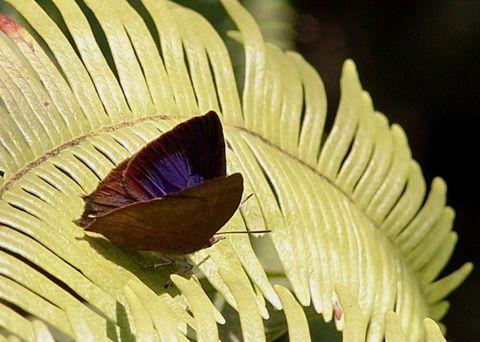 [原创摄影]春天到了蝴蝶来了 - 飞飞 - 蝴蝶飞飞