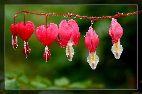 蝶舞贺春 - 蝶舞 - 面对岁月微笑如花,倾听光阴的故事....