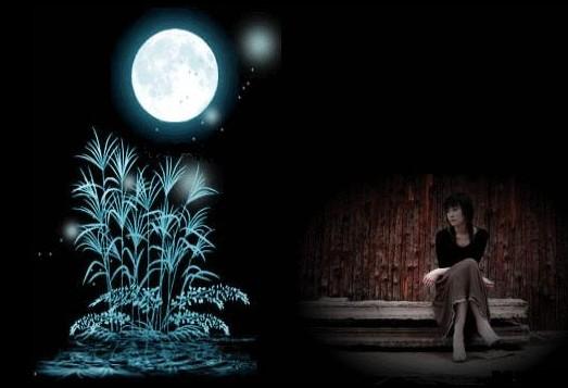 黄玫瑰 - 清清百合 - qqbh温馨小屋