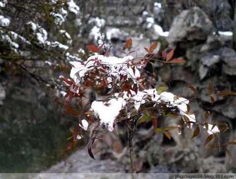 蠡湖贵雪(原创) - 青稞 - 青稞博客