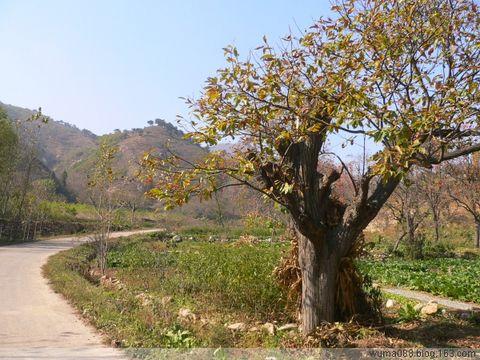 秋天的田园小路-深秋的美丽 相册