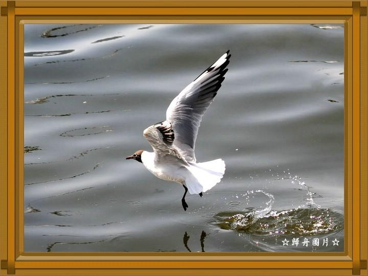 凌波轻舞 - 静远堂 - 静远堂  JING YUAN TANG